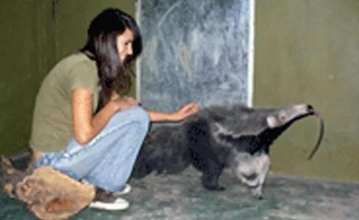 En Florencio Varela, el zoológico deberá pagarle 101 millones a una joven que murió atacada por un oso hormiguero